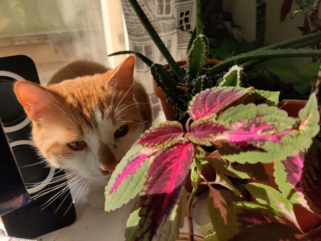 kissa huonekasvin takana